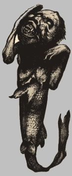 Picture Of Fiji Mermaid